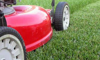 Lawn Care in Cambridge MA Lawn Care Services in Cambridge MA Quality Lawn Care in Cambridge MA