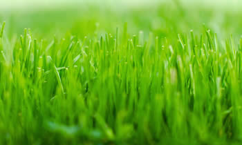 Lawn Service in Cambridge MA Lawn Care in Cambridge MA Lawn Mowing in Cambridge MA Lawn Professionals in Cambridge MA